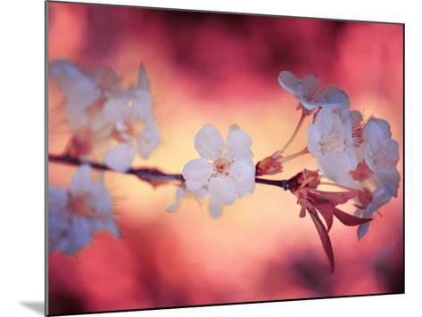 Spring Time 2-Philippe Sainte-Laudy-Mounted Photographic Print