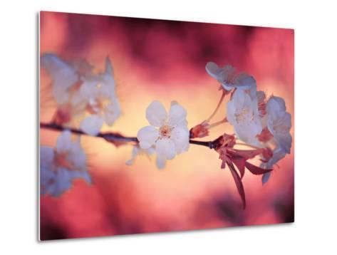 Spring Time 2-Philippe Sainte-Laudy-Metal Print