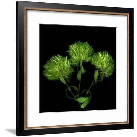 Green Pompons-Magda Indigo-Framed Art Print