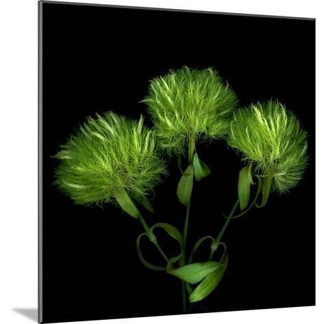 Green Pompons-Magda Indigo-Mounted Photographic Print