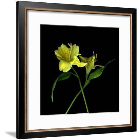 Alstroemeria 3-Magda Indigo-Framed Art Print
