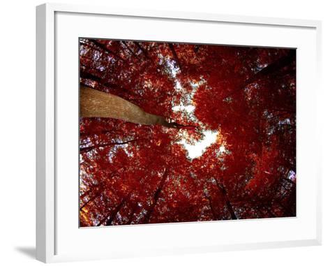 Red Fisheyes-Philippe Sainte-Laudy-Framed Art Print