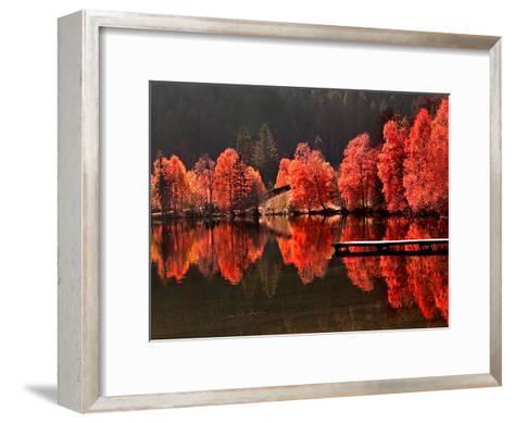 Trees Vs Trees-Philippe Sainte-Laudy-Framed Art Print