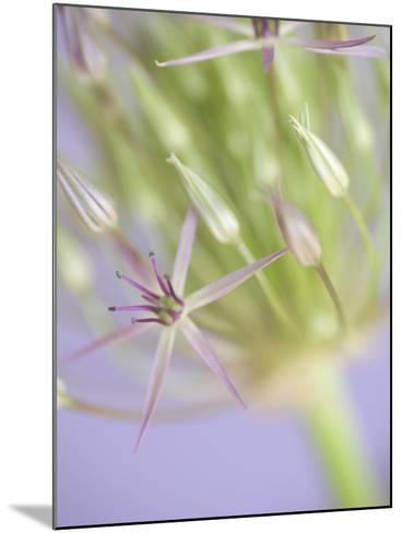 Oh So Gentle-Doug Chinnery-Mounted Photographic Print