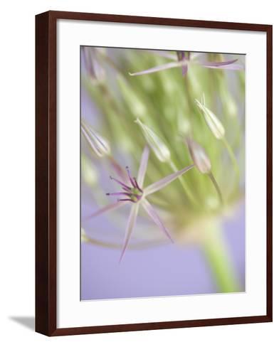 Oh So Gentle-Doug Chinnery-Framed Art Print