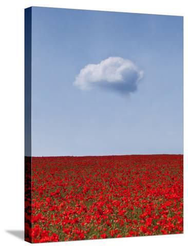 Poppylicious-Doug Chinnery-Stretched Canvas Print