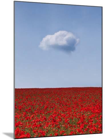 Poppylicious-Doug Chinnery-Mounted Photographic Print