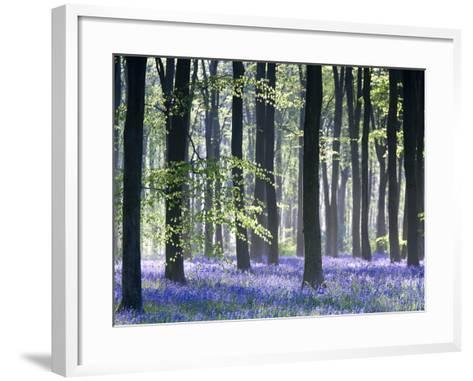 Bluebell Vision-Doug Chinnery-Framed Art Print