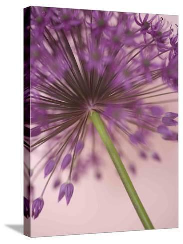 Purple Haze 5-Doug Chinnery-Stretched Canvas Print