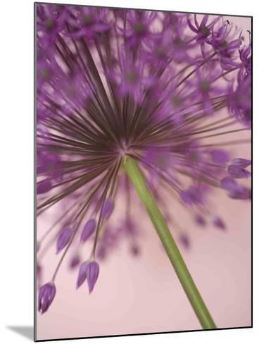 Purple Haze 5-Doug Chinnery-Mounted Photographic Print