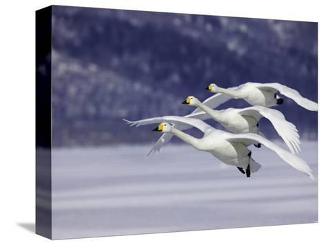 In Unison-Art Wolfe-Stretched Canvas Print