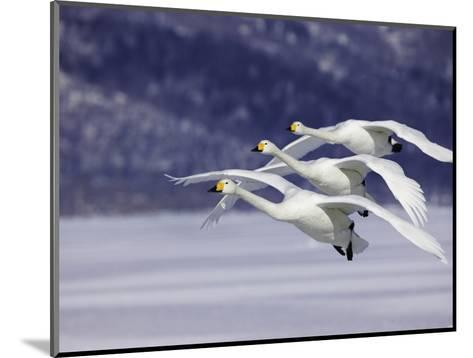 In Unison-Art Wolfe-Mounted Photographic Print