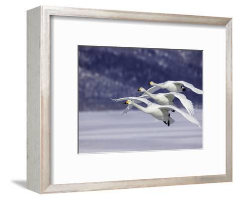 In Unison-Art Wolfe-Framed Art Print