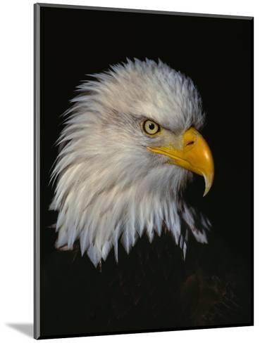 Posing-Art Wolfe-Mounted Photographic Print