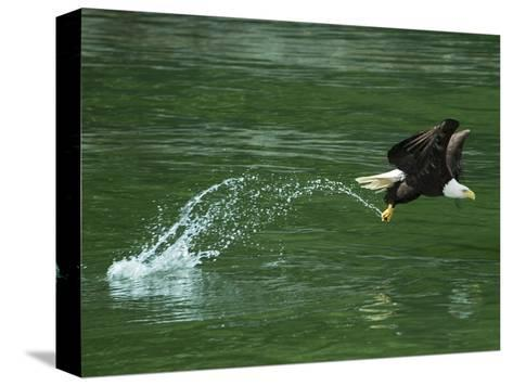 Water Skipping-Art Wolfe-Stretched Canvas Print