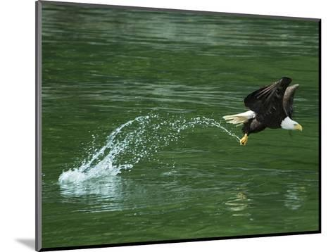 Water Skipping-Art Wolfe-Mounted Photographic Print