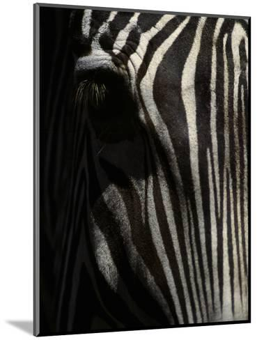 Ever Sleek 2-Art Wolfe-Mounted Photographic Print