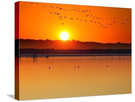 Migratory Birds-Marco Carmassi-Stretched Canvas Print