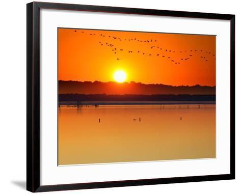 Migratory Birds-Marco Carmassi-Framed Art Print