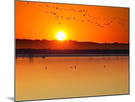 Migratory Birds-Marco Carmassi-Mounted Photographic Print