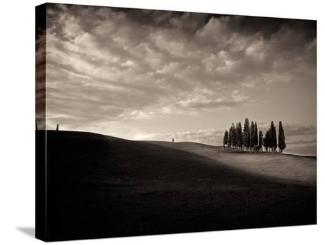 Cypress Wood-Marco Carmassi-Stretched Canvas Print