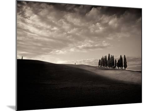 Cypress Wood-Marco Carmassi-Mounted Photographic Print
