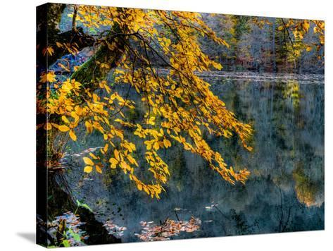 Yellow Leaves2-Nejdet Duzen-Stretched Canvas Print