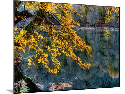 Yellow Leaves2-Nejdet Duzen-Mounted Photographic Print