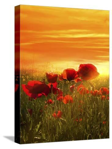 Spring Field-Marco Carmassi-Stretched Canvas Print