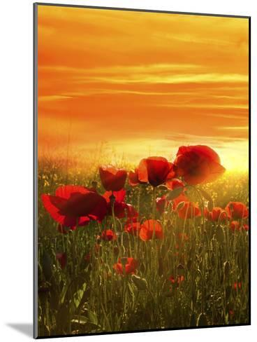 Spring Field-Marco Carmassi-Mounted Photographic Print