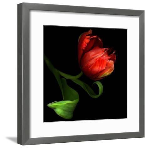 Parrot Tulip-Magda Indigo-Framed Art Print