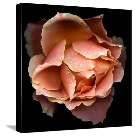 Rose Just Joey-Magda Indigo-Stretched Canvas Print