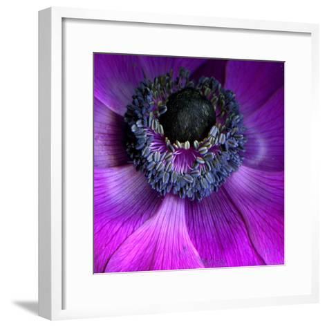 Purple Anemones-Magda Indigo-Framed Art Print