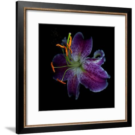 Lilly's Pollen-Magda Indigo-Framed Art Print