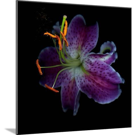 Lilly's Pollen-Magda Indigo-Mounted Photographic Print