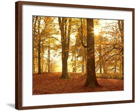 Autumn Glory-Doug Chinnery-Framed Art Print