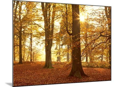 Autumn Glory-Doug Chinnery-Mounted Photographic Print