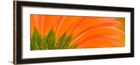 Oh So Close 8-Doug Chinnery-Framed Art Print