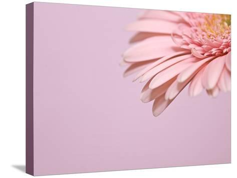 the Pinks 1-Doug Chinnery-Stretched Canvas Print