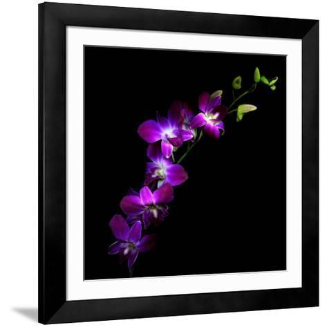 Purple Dendrobium Orchids-Magda Indigo-Framed Art Print