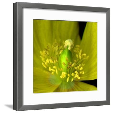 Poppy Yellow-Magda Indigo-Framed Art Print