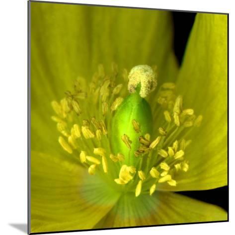 Poppy Yellow-Magda Indigo-Mounted Photographic Print
