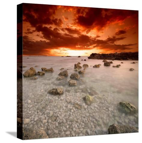 Rapsody in Red-Philippe Sainte-Laudy-Stretched Canvas Print