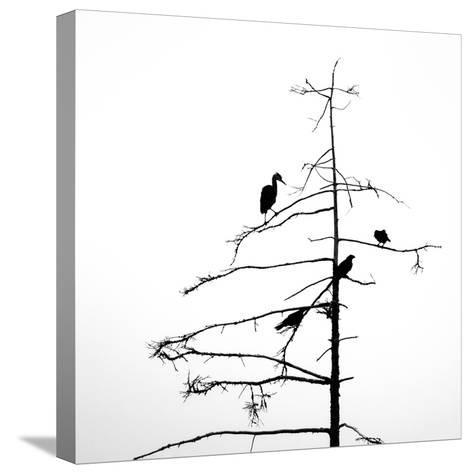 Three Crows and a Heron-Ursula Abresch-Stretched Canvas Print
