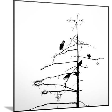 Three Crows and a Heron-Ursula Abresch-Mounted Photographic Print