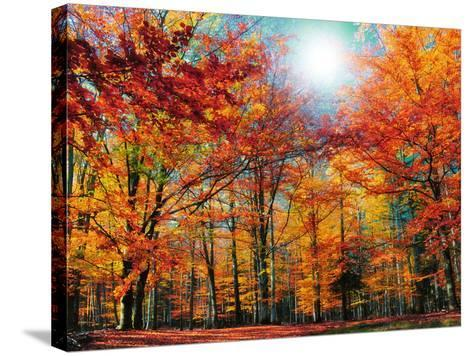Camouflage-Philippe Sainte-Laudy-Stretched Canvas Print