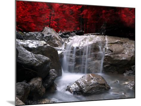 Red Vision-Philippe Sainte-Laudy-Mounted Photographic Print
