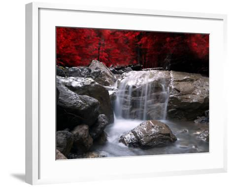 Red Vision-Philippe Sainte-Laudy-Framed Art Print