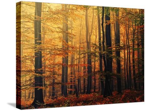 Meet Me in the Morning-Philippe Sainte-Laudy-Stretched Canvas Print