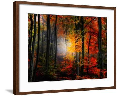Light Colors-Philippe Sainte-Laudy-Framed Art Print